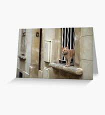 Ginger Cat - Arles, France Greeting Card