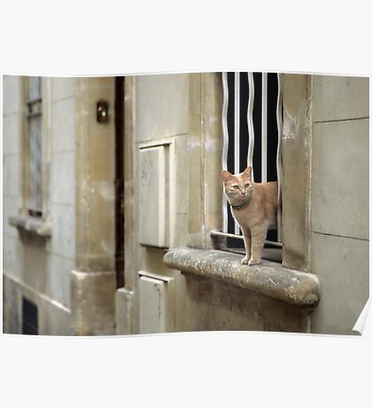 Ginger Cat - Arles, France Poster