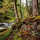 Old Salmon River Trail by Tim Cowley