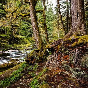 Old Salmon River Trail by babatim