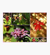 Amazing Flowers - Travel Photography Photographic Print