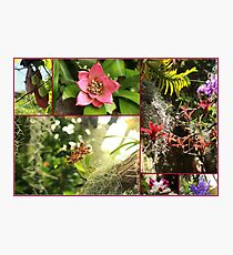 Incredible Flowers - Travel Photography Photographic Print