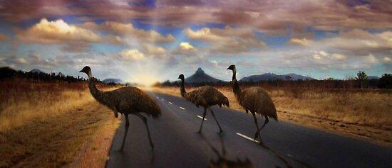 3 Emu's by Cliff Vestergaard