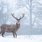 Red Deer In Snowfall by George Wheelhouse