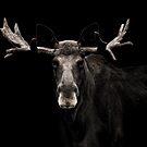 Low Key Moose Portrait by George Wheelhouse