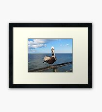 Pelican In North Carolina Framed Print