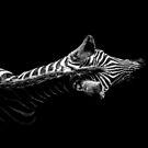 Low Key Zebra by George Wheelhouse