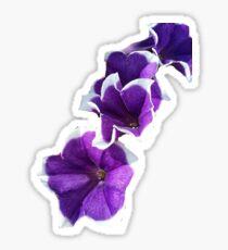 Purple White-Tipped Petunias Sticker