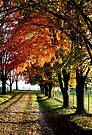 Autumn in the Ozarks by John Carpenter
