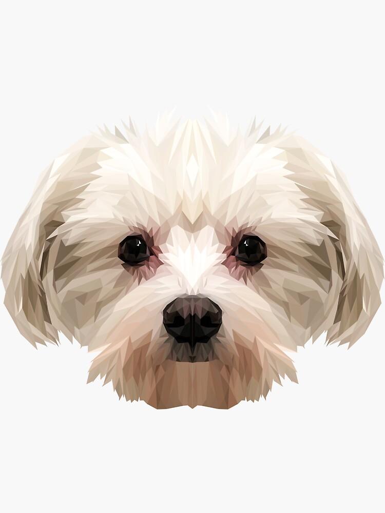 Maltesischer Hund. von shekularaz