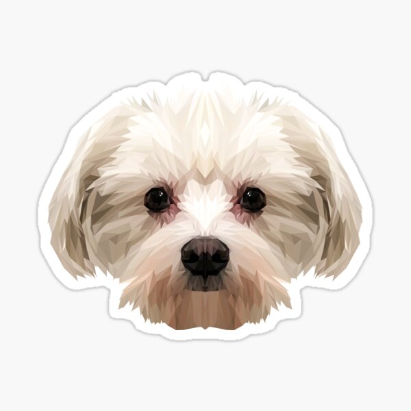 Maltese dog. Sticker