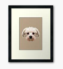 Maltese dog. Framed Print