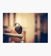 Black bird sitting on the metal pipe. Vintage sepia colors Photographic Print