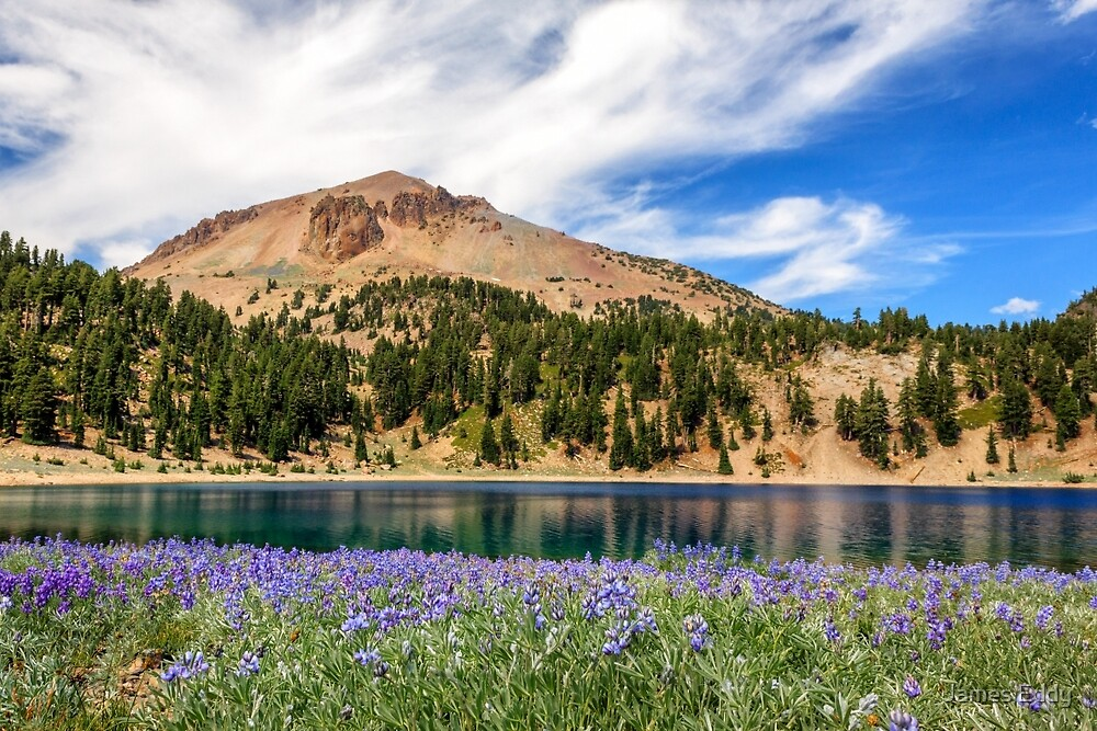 Lupines Lake And Lassen by James Eddy