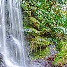 Tropical Garden by designingjudy