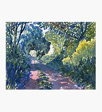Hockney's Tunnel of Trees Photographic Print