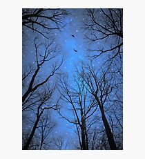 A Certain Darkness Is Needed (Night Trees Silhouette) Photographic Print