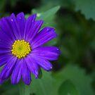 Single blue flower by MariaNikelova
