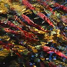 Kokanee Salmon Spawning by Jared Manninen