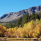 Mount Tallac and Golden Quaking Aspens by Jared Manninen