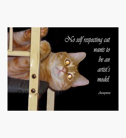Self respecting cat Photographic Print