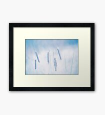 Water plant. Blue soft background. Nature texture Framed Print