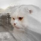 Soft and white like snow with a drop of golden sun by Mui-Ling Teh