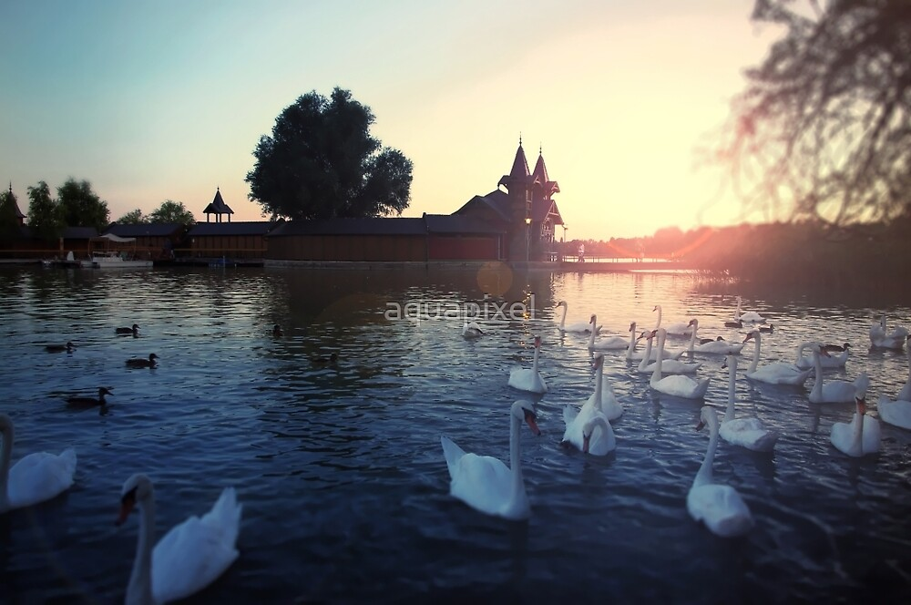 Sunset over the lake with swans. Beautiful view of the wooden house on an island on Lake Balaton by aquapixel