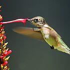 Sweet Nectar!! by Anthony Goldman