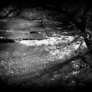 Cold Water Rising© by walela