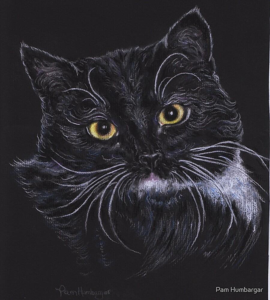 Oreo the Cat by Pam Humbargar
