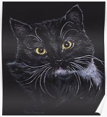 Oreo the Cat Poster