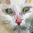 White Cat by blacknight