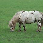 Miniature Shetland Pony by Mythos57
