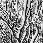 sleepy trees by Julia  Kovtunyak