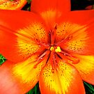 Orange Lily - all products by Shulie1