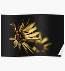 Flower in the dark Poster