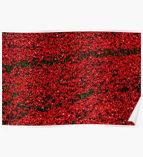 Poppy fields of remembrance for WW1 at Tower of London Poster