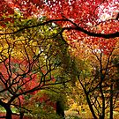 Autumnal Acers by MissElaineous Designs
