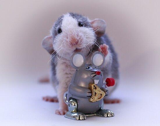 Rosie and her new toy :) by Ellen van Deelen