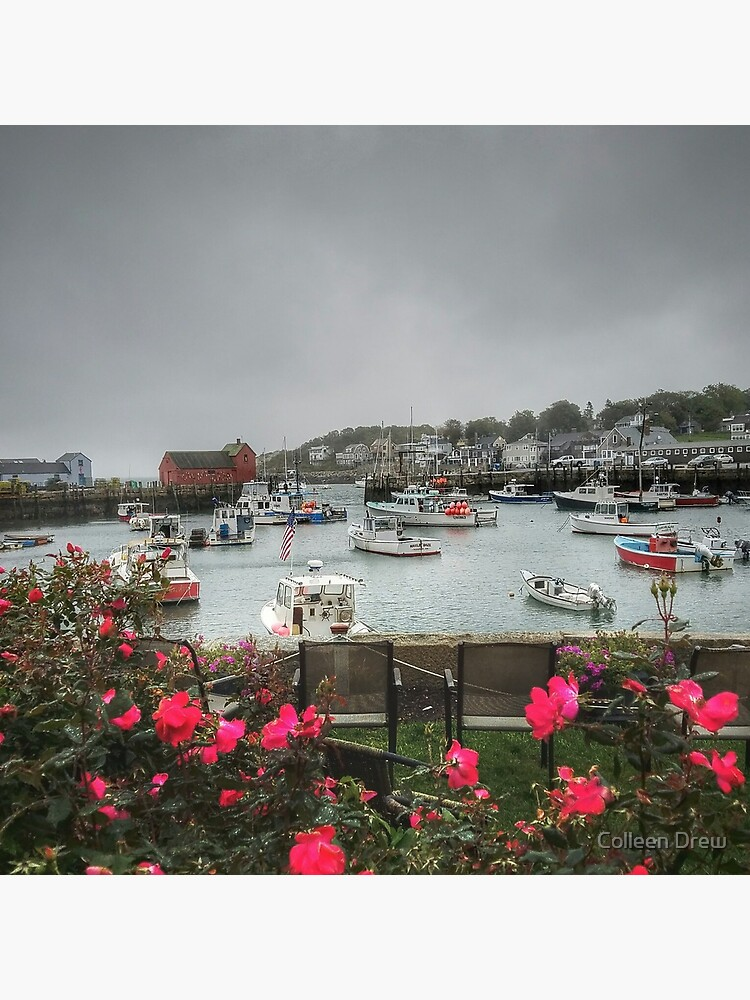 Rockport and Roses by colgdrew