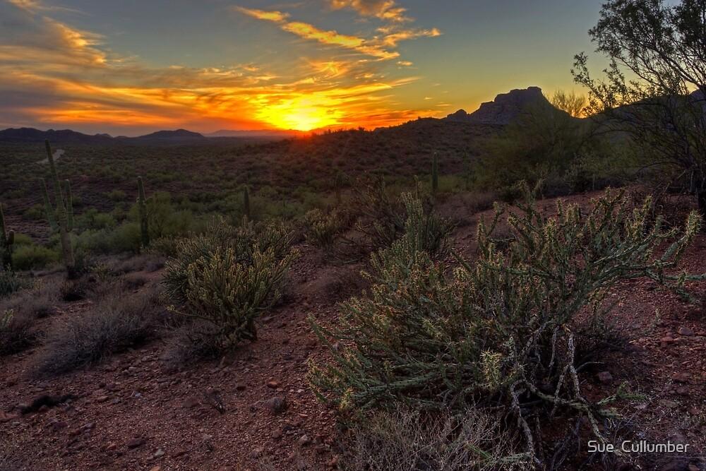 Sonoran Desert Sunset by Sue  Cullumber