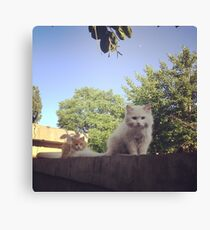 Cute Cats on a Ledge in Nature Canvas Print