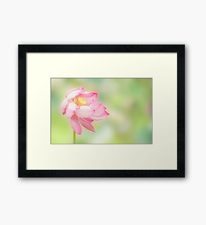 Blowin in the wind - lotus flower Framed Print
