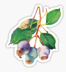 Eucalyptus branch with gumnuts - watercolour Sticker