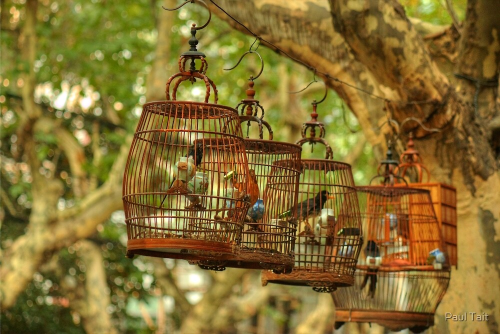 Birdcages by Paul Tait