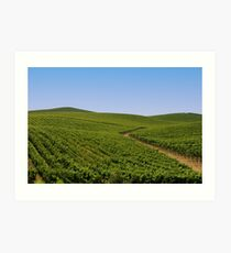 Vineyards Art Print