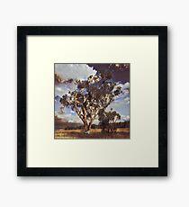 Australian Windswept Tree 01 Framed Print