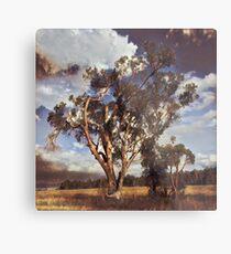 Australian Windswept Tree 01 Metal Print