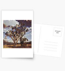 Australian Windswept Tree 01 Postcards